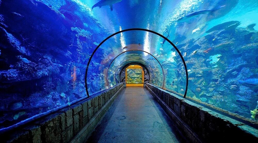 """""""Rặng Cá mập"""" Vịnh Mandalay với hơn 100 loài sinh vật biển"""